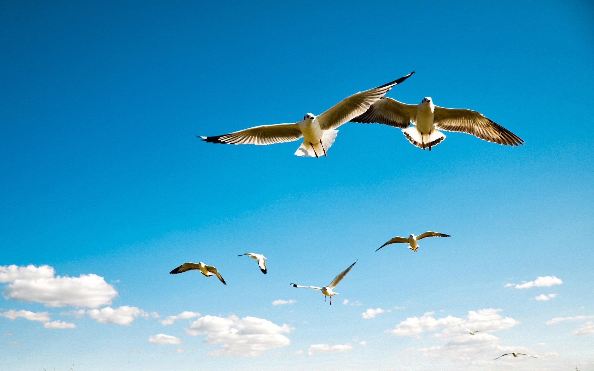 展开艺术想象翅膀  创造诗境凌空翱翔 ——浅谈写诗的想象(作者:周   波)